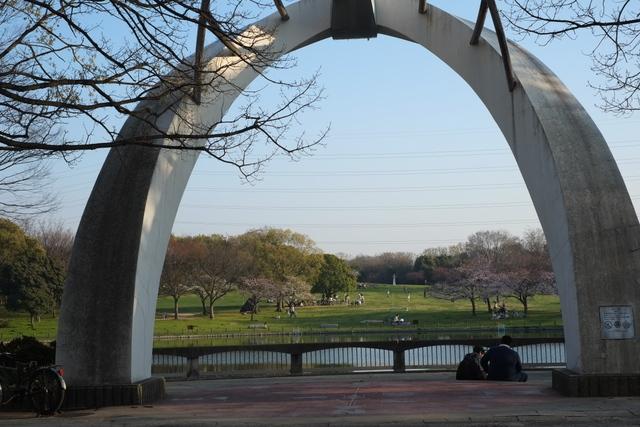 大仙公園の桜