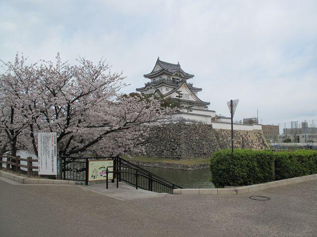 岸和田城 桜まつり