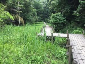 大阪府府民の森 むろいけ園地