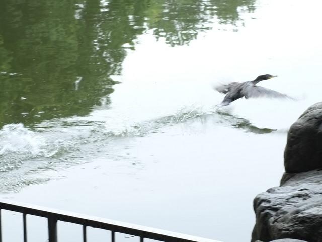 大泉緑地(おおいずみりょくち)の野鳥撮影スポット