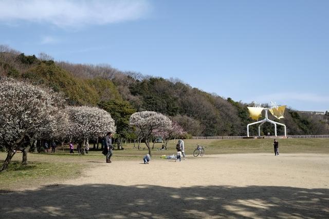 荒山公園(こうぜんこうえん)の梅